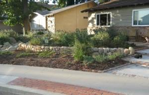 Native Plant Garden in November