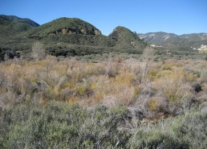 Upper Sespe Wilderness