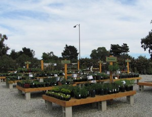 Some of their selections of plants.